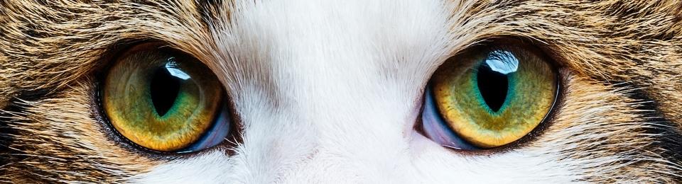 Macska szeme könnyezik - Segítség, mit csinájak vele?